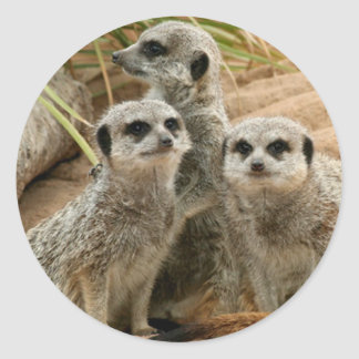 Meerkats on the lookout classic round sticker