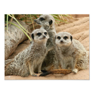 "Meerkats on the lookout 4.25"" x 5.5"" invitation card"