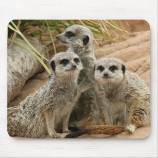 Meerkats on the lookout mouse pad