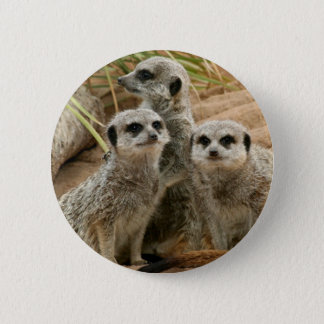 Meerkats on the lookout pinback button