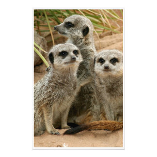 Meerkats on the lookout stationery design