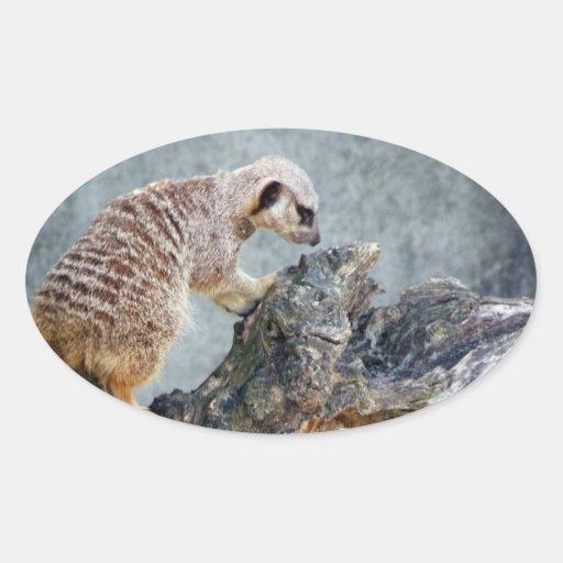 Meerkats Pegatina Ovalada