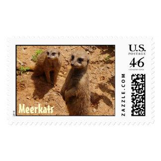 Meerkats Sello