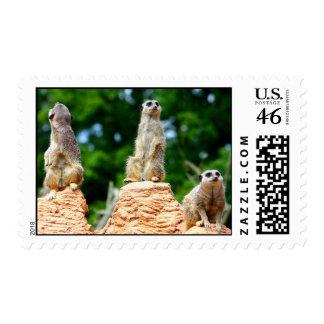 Meerkats....... Stamps