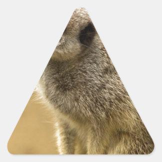 Meerkats Stickers