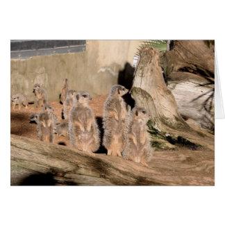 Meerkats Tarjeta De Felicitación