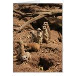 meerkats tarjeton