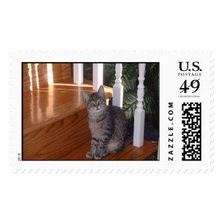 Meet Maxie Postage