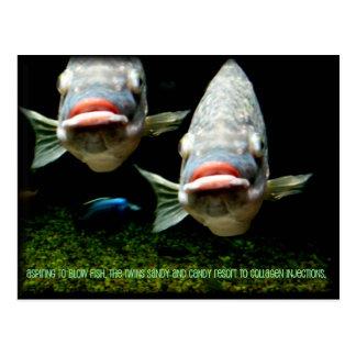 Meet the Twins ~ funny fish ~ postcard