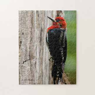 Meeting a Red-Breasted Sapsucker Jigsaw Puzzle