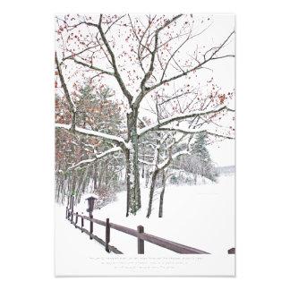 Meeting a tree photo print