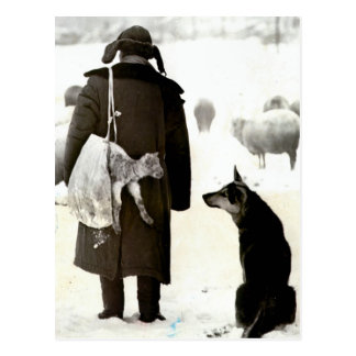 Meeting of animals in the snow postcard