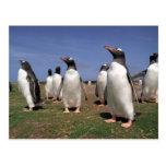 Meeting penguins postcard
