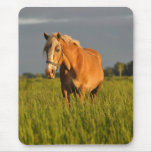 Meg in the Pasture Mouse Pad