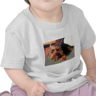 Meg - Yorkshire Terrier Photo-08 T Shirts