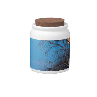 Mega Beaver Moon Candy Jars