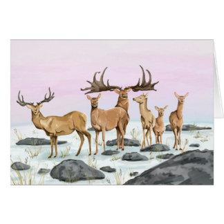 Megaceros (Irish Elk) Card