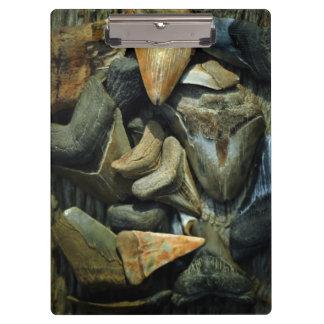 Megalodon Fossil Shark Teeth Clipboards