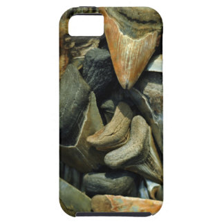 Megalodon Fossil Shark Teeth for Iphone 5 iPhone SE/5/5s Case