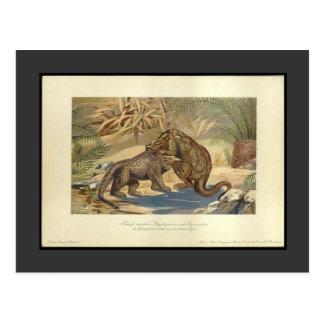 Megalosaurus del vintage CONTRA la postal de Iguan