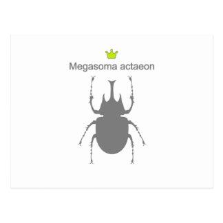 Megasoma actaeon g5 postcard