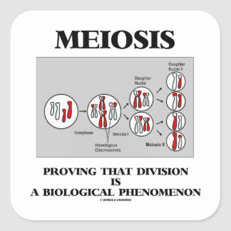 Meiosis Proving That Division Is A Biological Square Stickers