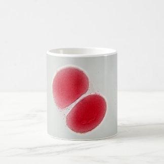 Meiosis - una célula de huevo debajo del taza de café