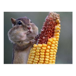 Mejillas del Chipmunk por completo del maíz Tarjeta Postal