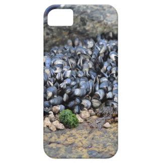 Mejillones iPhone 5 Case-Mate Cárcasas
