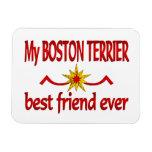 Mejor amigo de Boston Terrier Iman
