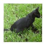 mejora gato negro en la hierba azulejo