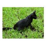 mejora gato negro en la hierba postales