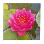 Mejora rosa de lago azulejo cuadrado pequeño