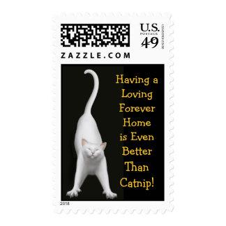 Mejore que franqueo del gatito del Catnip