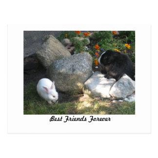 Mejores amigos para siempre tarjeta postal