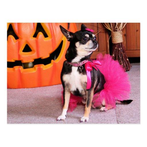 Meka - Chihuahua - Shaver Postcard
