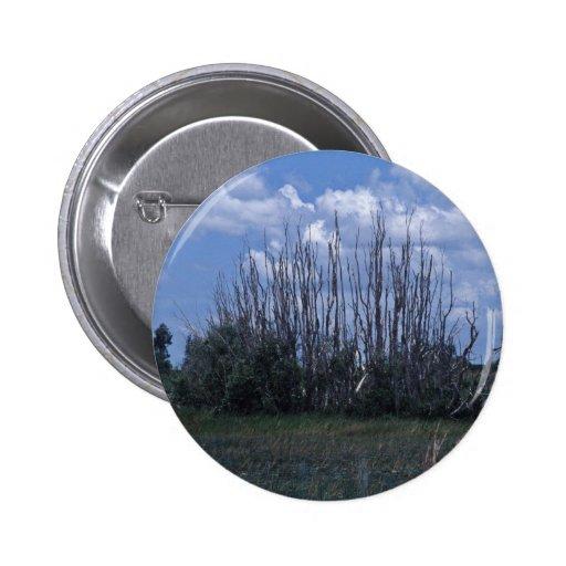 Melaleuca muerto pins