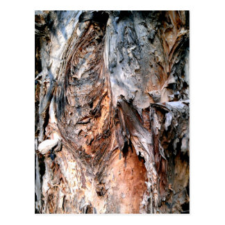 Melaleuca Paperbark Tree Postcard