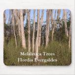 Melaleuca TreesFlordia... Mousepad
