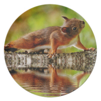 Melamine plate squirrel