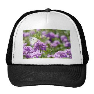 Melanargia larissa kind of anatolia butterfly trucker hat