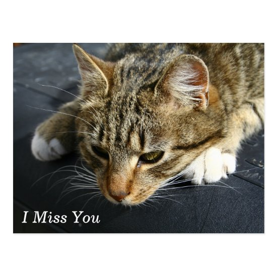 [Melancholy Cat] I Miss You Postcard
