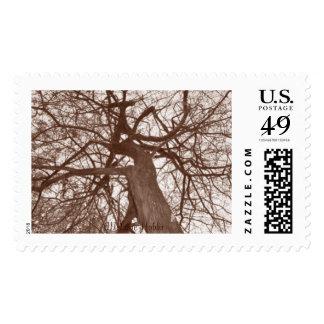 Melanie Hobbs Stamp