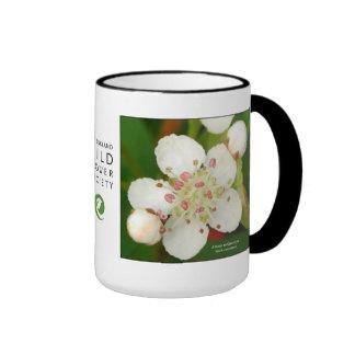 Melanocarpa de Aronia chokeberry negro Tazas De Café