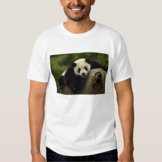 Melanoleuca) del Ailuropoda del bebé de la panda Camisas