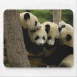 Melanoleuca) del Ailuropoda del bebé de la panda g Alfombrilla De Ratones