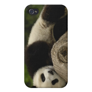 Melanoleuca) del Ailuropoda del bebé de la panda g iPhone 4 Fundas