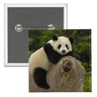 Melanoleuca) del Ailuropoda del bebé de la panda g Pin Cuadrada 5 Cm