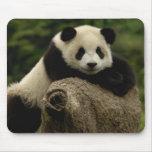 Melanoleuca) del Ailuropoda del bebé de la panda g Tapete De Ratones