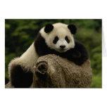 Melanoleuca) del Ailuropoda del bebé de la panda g Felicitaciones